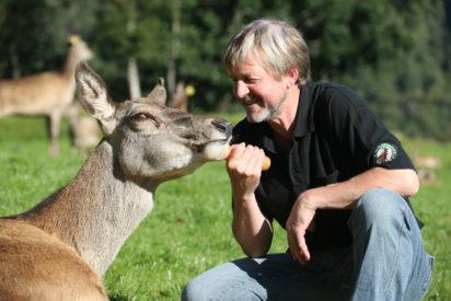 Hjorteforvaltning i praksis – kalveskyting og sparing av bukk